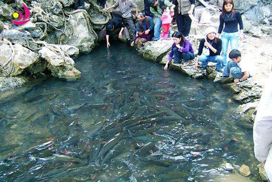 Du lịch hè: Hà Nội – Suối cá thần Cẩm Lương – Sầm Sơn – Hà Nội 3 ngày 2 đêm giá rẻ