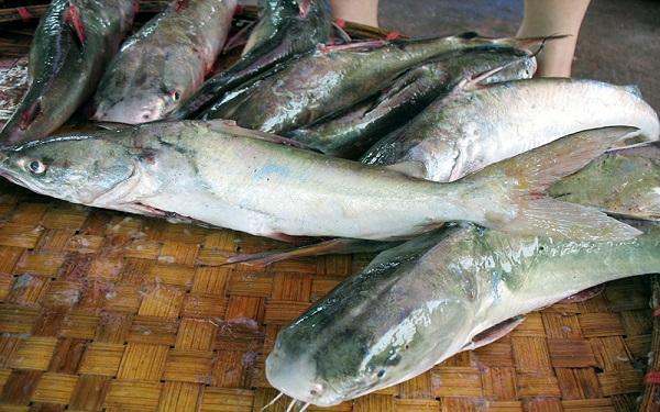 Cá ba gai Hạ Long