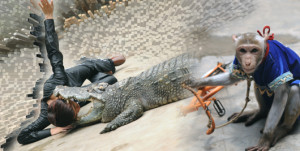 Biểu diễn cá sấu Hạ Long